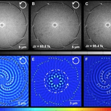 Electron microscopy images of long-range surface plasmons in a sample with orbital angular momentum of l=10. Upper row: Experiments. Bottom row: Simulations.  University of Kaiserslautern and Technion, Haifa, Experimental image taken by Deirdre Kilbane. Theoretical simulation by Grisha Spektor.