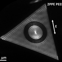 PEEM image of a 22 nm thick single crystalline gold platelet, patterned with a circular grating of 150 nm period via focused ion beam milling. The diameter of the central disk is 2 µm. The short-range plasmon couples into the disk, waves collide at the center, forming an oscillating 60x120 nm² electron hot spot, from which the electrons are emitted.